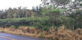 Roundup use on Maui