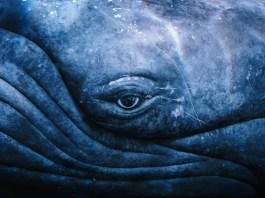 Maui Aquarium Whale Sphere