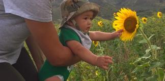 Maui Sunflowers Biodiesel