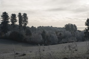 Maulden Woods, Winter