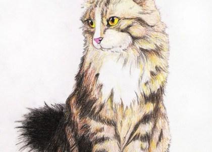 EpicNerull (David) - Gato