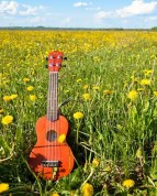 Sergio13- ukuleleinmarseille