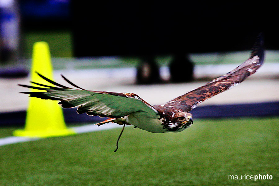 Seattle Sehawks Pictures