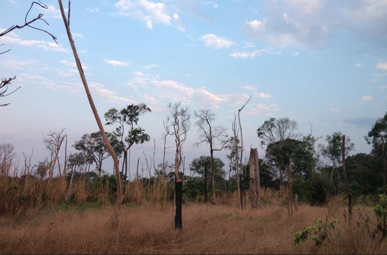 Área da Floresta Amazônica  no norte de Mato Grosso, degradada por queimadas. Imagem: Maurício Tuffani/FolhaPress (27.ago.2014)