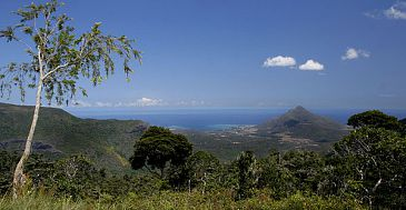 Maccabée Forest Mauritius