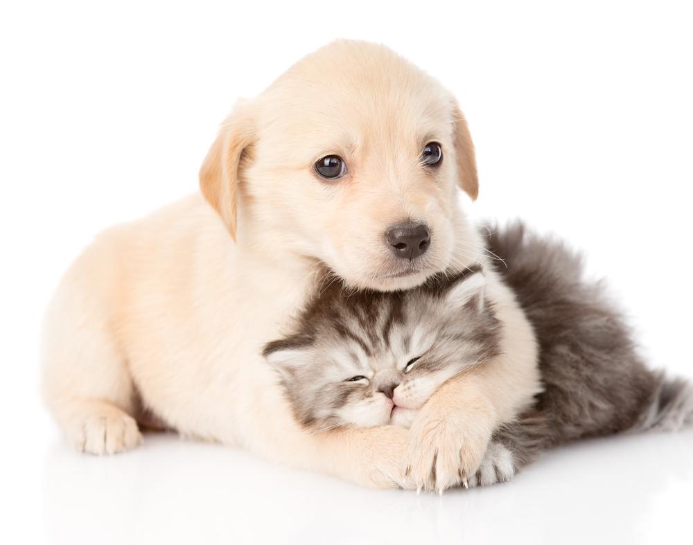 puppy kitten care in