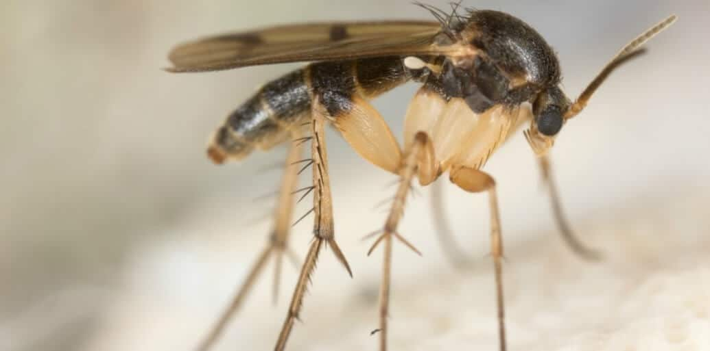 How To Get Rid Of Gnats In The Kitchen