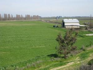 Delta farm #3 Mar 2009 smaller
