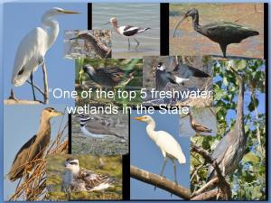 KWB wetlands pics