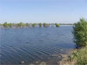 Kern Water Bank pond
