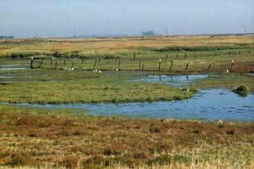 Suisun Marsh wetlands Photo courtesy of DWR