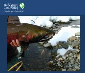 Jay Zeigler (The Nature Conservancy)_Page_11
