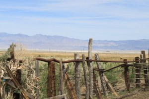Cattle ranch in the Owens Valley. Photo by Chris Austin. All rights reserved.