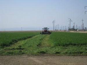 Alfalfa cutting #2 - SJRIP Apr 2010