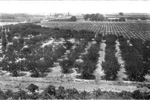 Central Valley 1900s