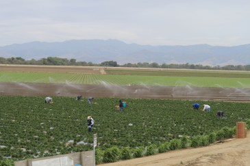 Salinas Valley agriculture May 2014 #10