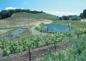 Hillside vineyard pond Sonoma County NRCS