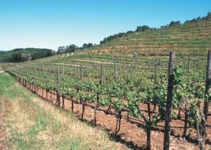 Sonoma County hillside vineyard NCRS