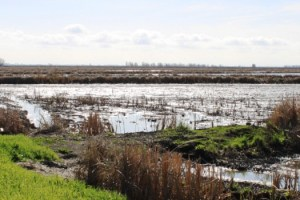 Yolo Bypass flooded field by Chris Austin