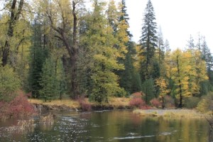 fall-colors-along-the-yuba-river