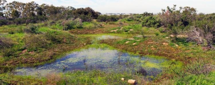 Vernal pools in San Diego County