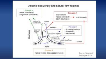 Aquatic biodiversity and natural flow regimes