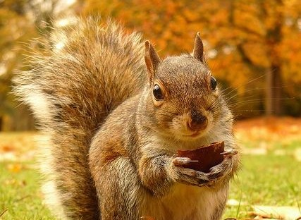 meaning of squirrel