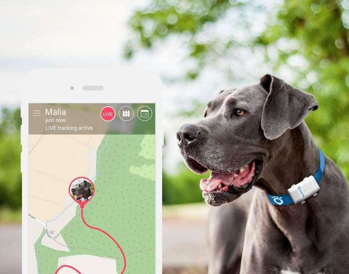Tractive gps XL pet tracking app