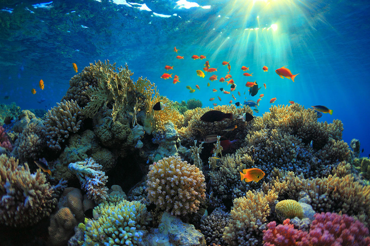 Underwater Hindu Temple Bali Indonesia  Sulekha Creative
