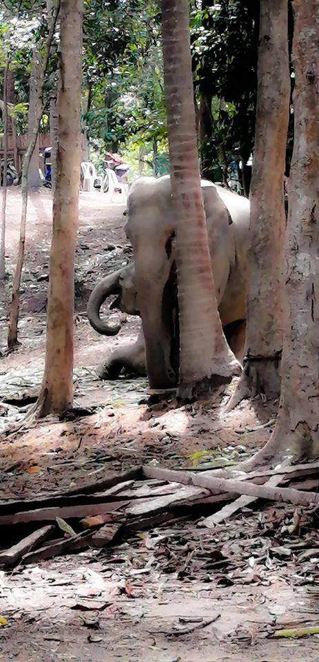 Elephant Sanctuary a Koh Samui. La maman éléphant et le bébé.