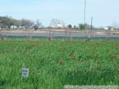 Wildseed-farms_24