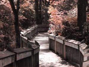 chemin pont fleurs