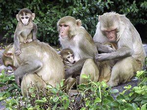 tantrums in baby monkeys