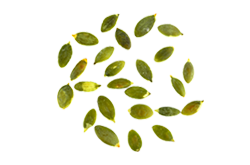 https://i0.wp.com/mavroidis.gr/wp-content/uploads/2017/07/bread_transparent_04.png?fit=250%2C165