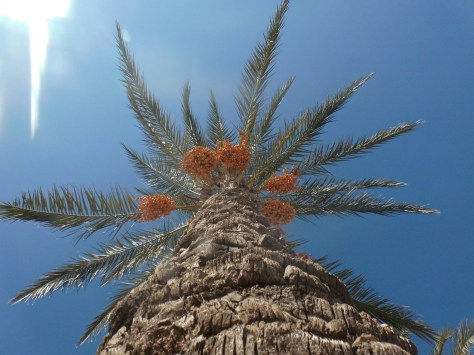 The rugged hard bark of a palm tree.