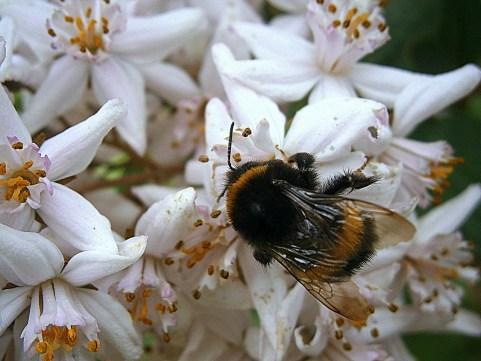 """Deborah - """"bee"""""""