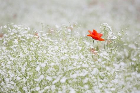 Weed or flower?