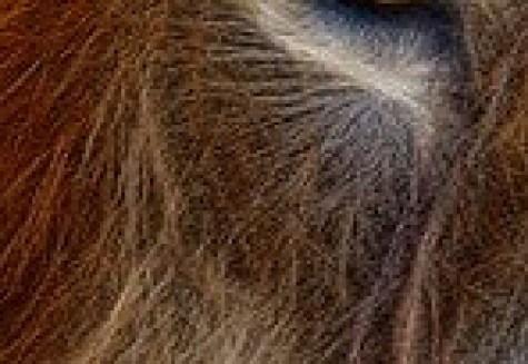 Pixabay - OCC Public Domain - Fractalius Big Cat Animal Animal World Lion Mane