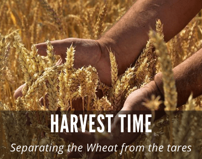 Harvest Time: Separating the Wheat and Weeds