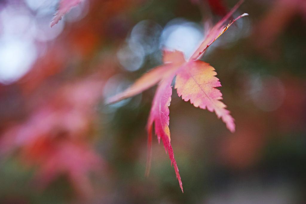 長瀞紅葉まつり2018