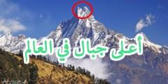 في اي قاره يقع اعلى جبل في العالم