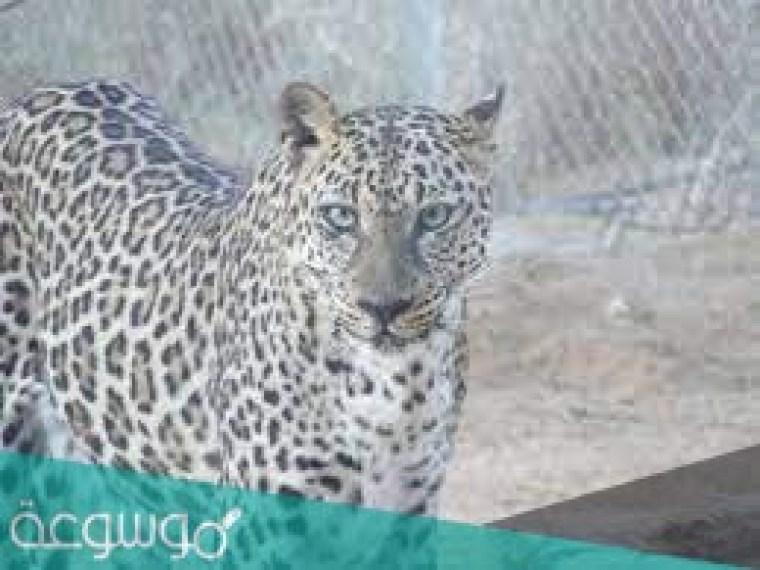 الحيوانات المهددة بالانقراض في المملكة