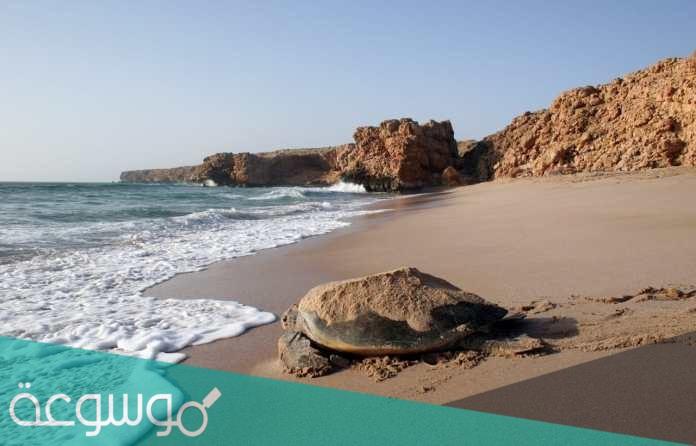 اين تقع محمية السلاحف في عمان
