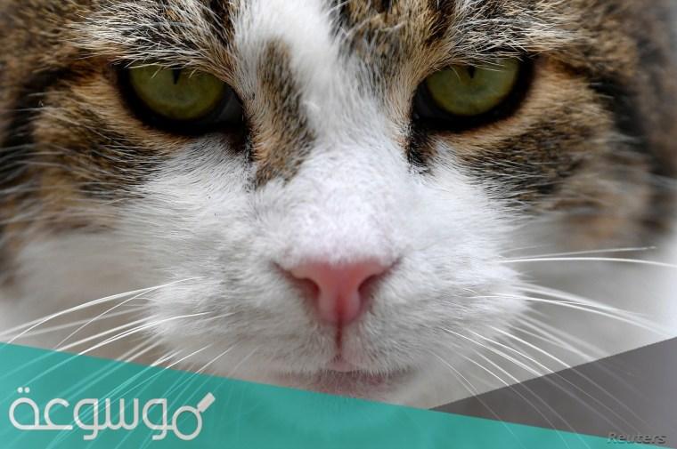 أجمل أسماء قطط كيوت ذكور واناث 2021