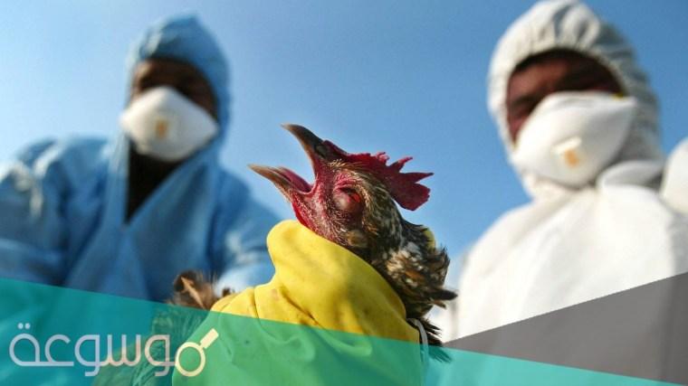 مرض انفلونزا الطيور