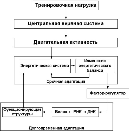 Вадим Протасенко / рисунок 1