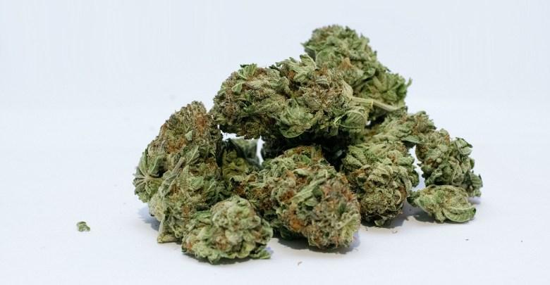 Best Grinder For weed Black Friday