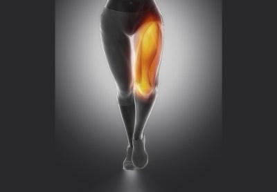 大腿四頭筋 構造図