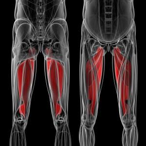 内転筋 人体構造図