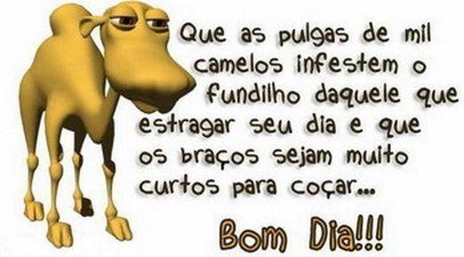 Frase Engraçadas De Bom Dia: Mensagens De Bom Dia Para Amigos Do WhatsApp E Facebook